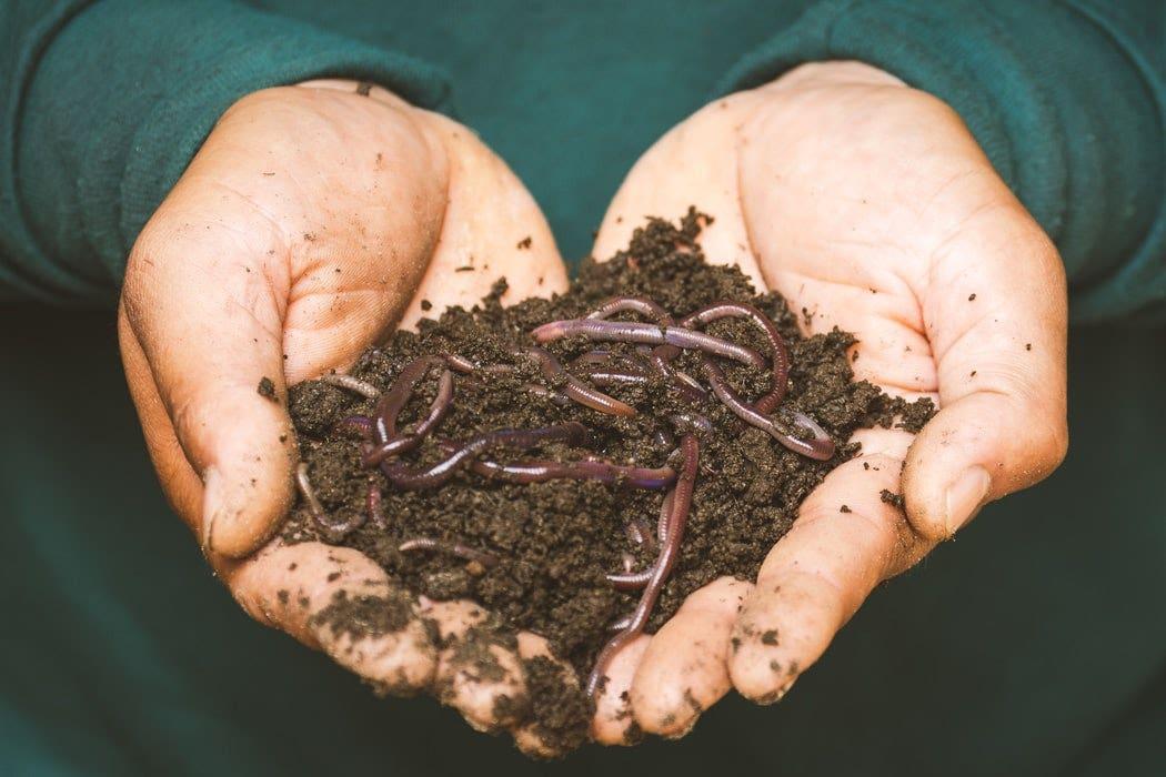 Worm Farm Home Composting